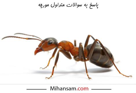 سوالات متداول درباره مورچه ها