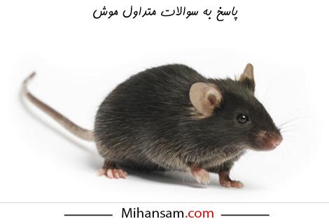 سوالات متداول در مورد موش ها