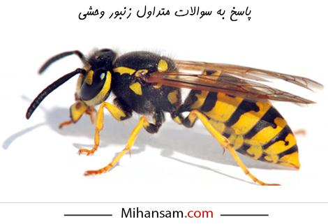 سوالات متداول زنبورهای وحشی
