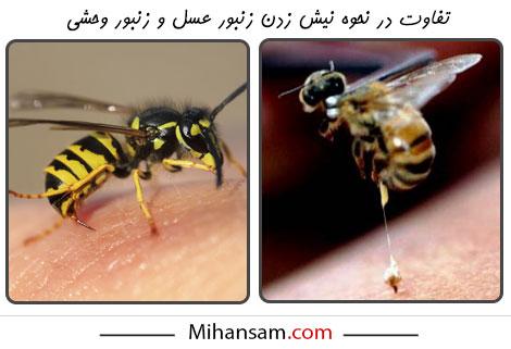 زنبورهای وحشی در نحوه نیش زدن با زنبورهای عسل متفاوت عمل می کنند