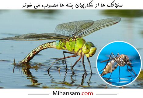 از بین بردن پشه ها با استفاده از روش های بیولوژیکی