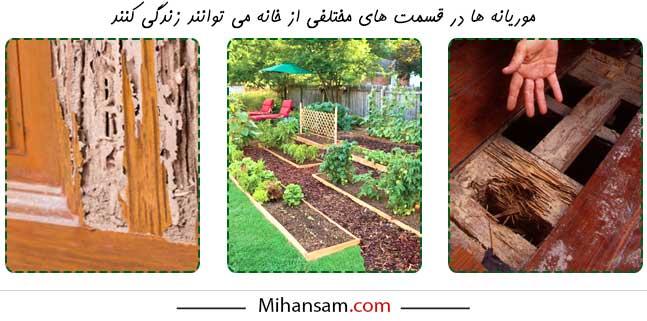 موریانه ها می توانند در قسمت های مختلف خانه زندگی کنند