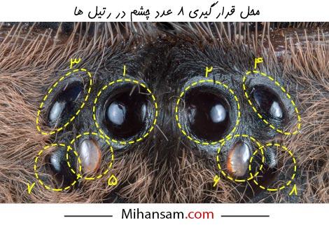 چشم های رتیل