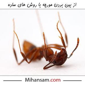 از بین بردن مورچه با روش های ساده