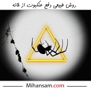 روش های طبیعی دفع عنکبوت