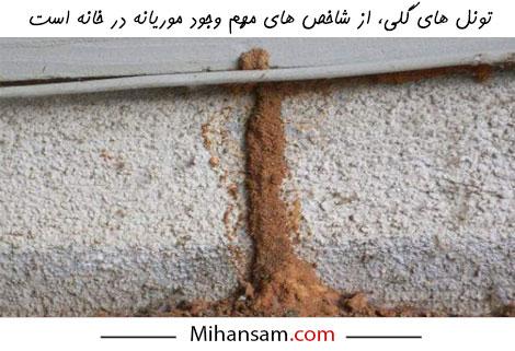 تونل های گلی از مهم ترین نشانه های وجود موریانه در خانه