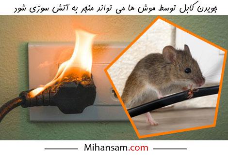 آتش سازی سیم برق بر اثر جویدن موش در خانه