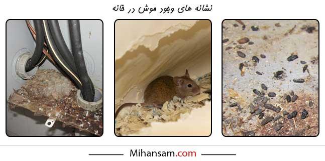 نشانه هایی که خبر از وجود موش در خانه می دهند