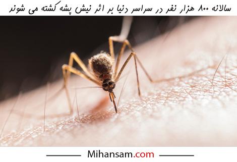 خطر ناشی از نیش پشه