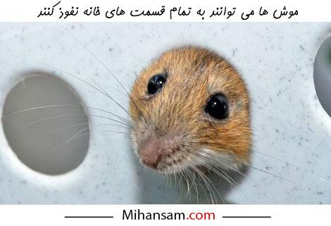 موش ها می توانند از سوراخ های کوچک عبور کرده و به تمام قسمت های خانه نفوذ کنند