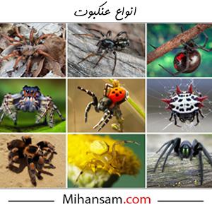 انواع عنکبوت و تار عنکبوت