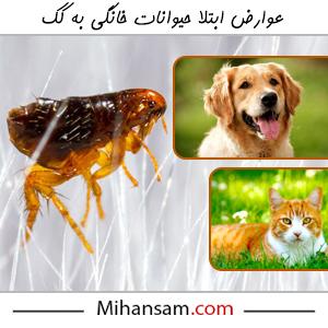 کک در حیوانات خانگی