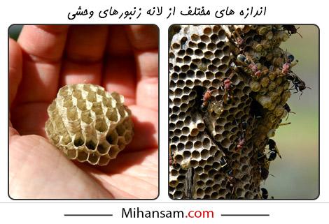 در هر فصل از سال، اندازه لانه زنبورهای وحشی متغیر است