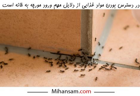 برای پیشگیری از ورود مورچه به خانه مواد غذایی را در دسترس قرار ندهید