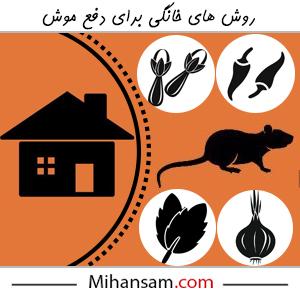 دفع موش با روش های خانگی