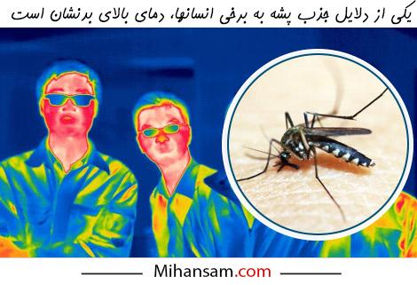 پشه ها افرادی را که دمای بدنشان به هر دلیلی بالا است بیشتر نیش می زنند