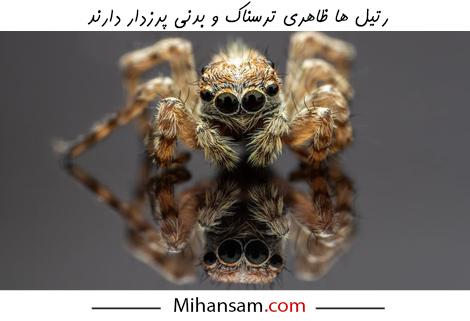 یکی از دلایل ترس انسان از وجود رتیل در خانه ظاهر ترسناک و جثه بزرگ آن ها است