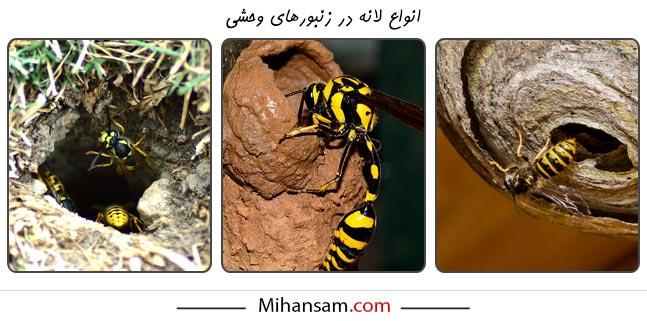 جنس و ساختار لانه در زنبورهای وحشی متنوع است