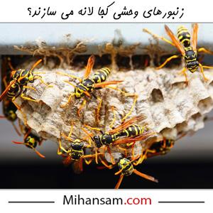 لانه زنبورهای وحشی