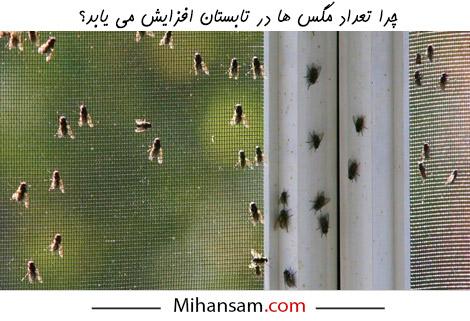 دلایل افزایش تعداد مگس ها در تابستان چیست؟