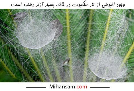 وجود تار عنکبوت ها گاهی از خود عنکبوت ها نیز آزار دهنده تر است