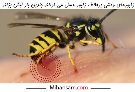 زنبورهای وحشی این امکان را دارند که چندین بار نیش بزنند